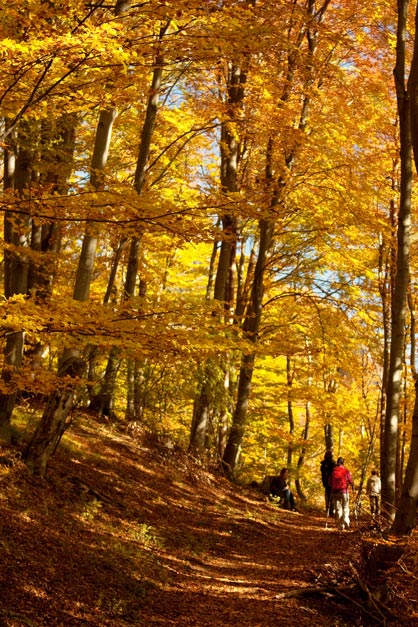 Cervena trasa na Sedlo pod Bradou na jesen