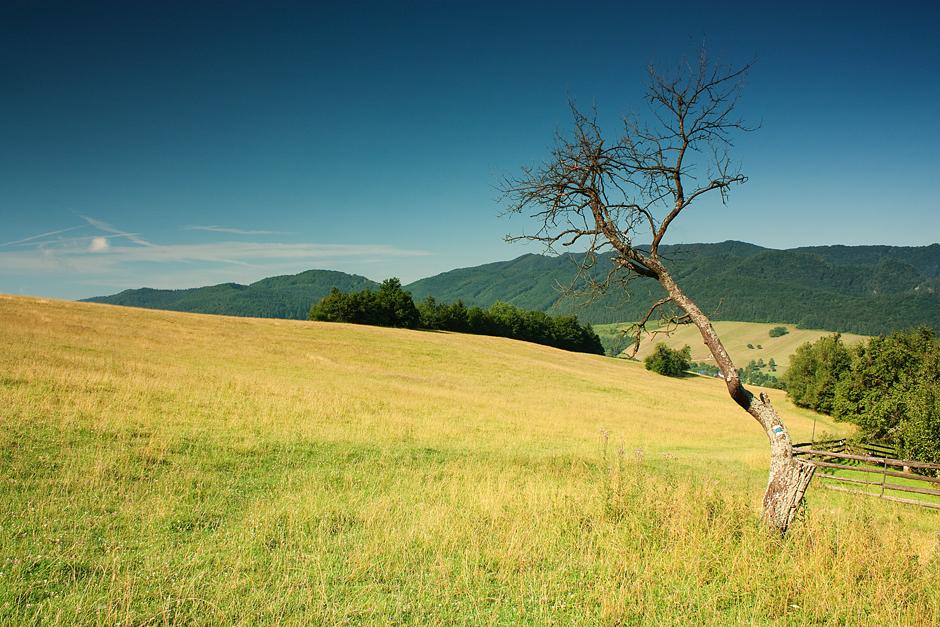 Leto strom v Sulovskych vrchoch