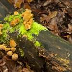 Jesen huby Sulovske vrchy